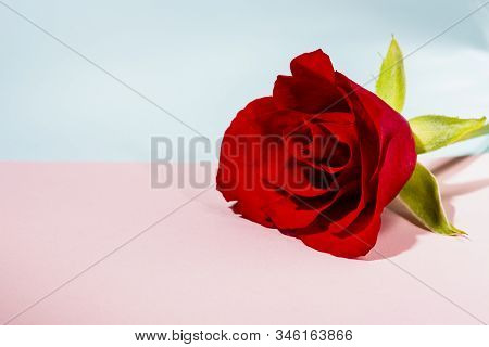 Valentines Day Or Mother Day Card With Red Rose On Bright Pink And Blue Background, Romantic Floral