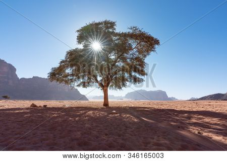 A Tree Stand Alone Against The Sun With Tree Shade Shadow, At Wadi Run Desert In Jordan