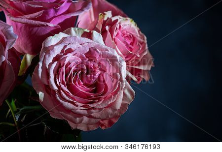 Closeup Of Beautiful Pink Roses On A Dark Background With Copy Space