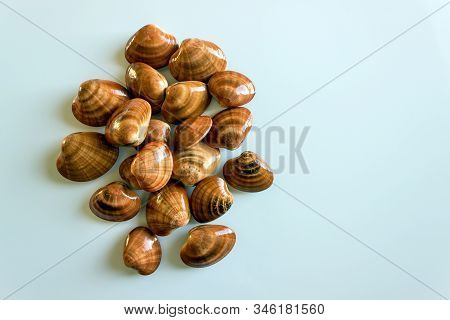 Fresh Clams, Raw Cockles On A White Table. Concept - Healthy Food, Aphrodisiac; Mediterranean Diet.