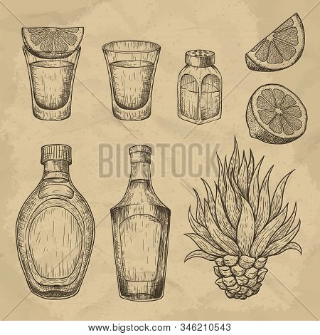 Glass And Bottle Of Tequila. Cactus, Salt And Lime. Hand Drawn Engraved Vector Vintage Illustration.