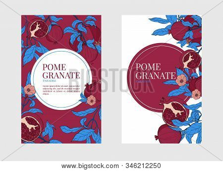 Vector Vertical Banners With Pomegranate Fruits On White And Burgundi Background. Design For Cosmeti