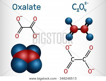 Oxalate Anion, Ethanedioate Molecule.  Structural Chemical Formula And Molecule Model. Vector Illust