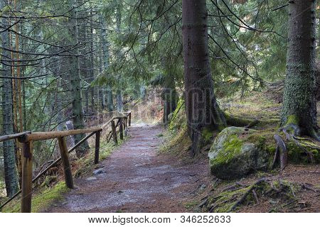 Nature Hiking Trail Surrounded By Coniferous Forest. Location: Surroundings Mountain Lake Vrbicke La