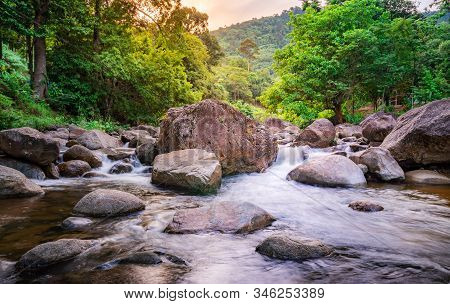 River Stone And Green Tree, View Water River Tree, Stone River Green Tree Leaf In Forest