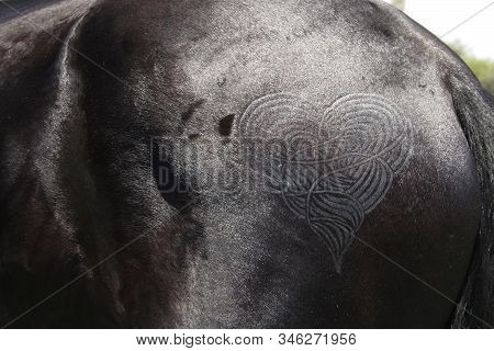 Horse Of The Year 2009, Kyalami, South Africa 23 January 2009. Quarter Marks On A Horses Croup, Frie