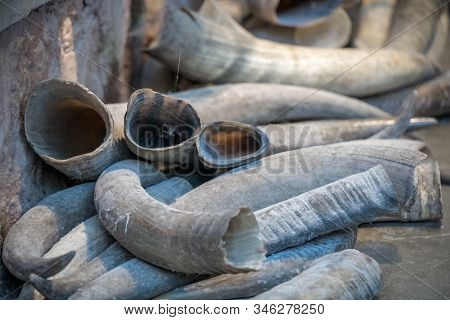 Pile Of Animal Tusks For Sale In The Local Shop In Market In The Old Town Of Fenghuang, Hunan Provin
