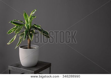 Beautiful Tropical Plant On Table In Room, Space For Text. Element Of Interior Design