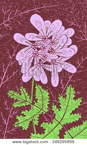 Coriander - Floral Illustration. Colorful Plant Drawing. Graphic Psychedelic Multicolored Line Art.