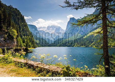 Gosausee Lake And Tree With Dachstein Mountain Range Behind, Austria