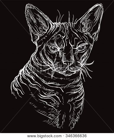 Vector Hand Drawing Portrait Of Angry Sphinx Cat In White Color Isolated On Black Background. Monoch