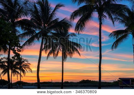 Palm Trees Silhouettes On Tropical Beach  At Sunrise In Miami Beach, Florida.