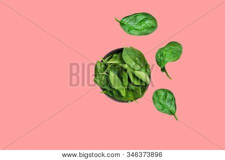 Fresh Raw Spinach Leaves In Dark Bowl Isolated On Cherry Pink Background. Healthy Plant Based Diet D