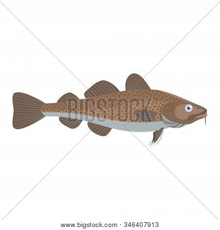 The Cod Is Isolated On The White Background.