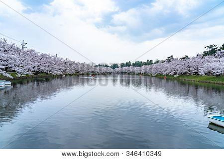 Hirosaki Park Cherry Blossoms Matsuri Festival In Springtime Season Beautiful Morning Day. Beauty Fu