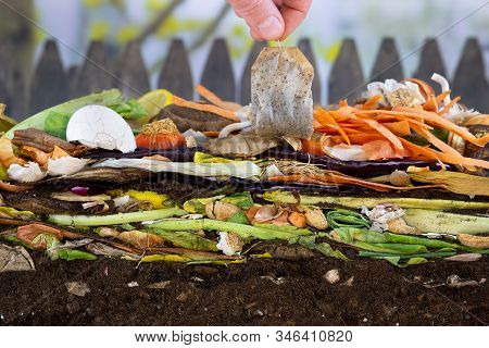 Male Hand Adding A Biodegradable Teabag To A Colorful Compost Heap Consisting Of Rotting Kitchen Lef