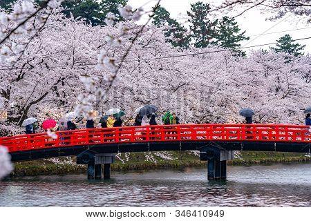 Hirosaki Park Cherry Blossoms Matsuri Festival In Springtime Season. Beauty Full Bloom Pink Sakura F
