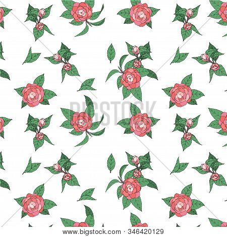 Vintage Garden Natural Seamless Pattern With Pink Flowers Camellia, Botanical Illustration On White