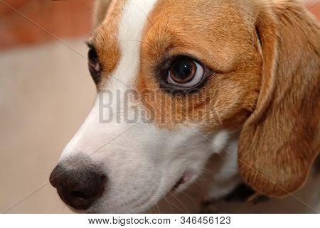 cute puppy dog closeup portrait looking at camera eyes nose macro