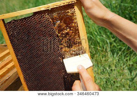 honey outdoors summer  beekeeping beeswax