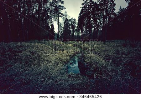 Dark Mysterious Forest With Small River. Nature.