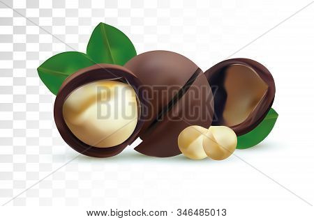 3d Realistic Macadamia Nut Isolated On Transparent Background. Shelled Macadamia Nuts With Green Lea