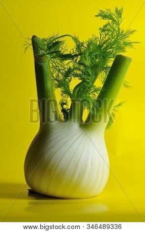 Close-up Of A Fennel Bulb With Feathery Green Leaves On Yellow Background