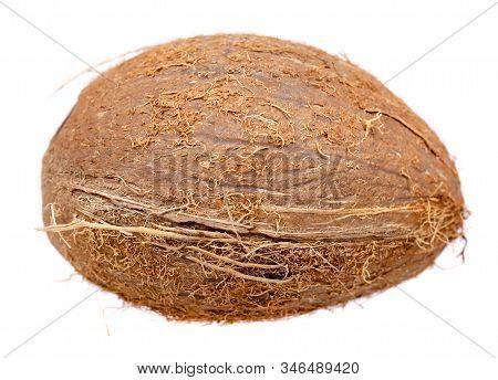 Fresh Raw Coconut, Whole Drupe. Isolated On White.