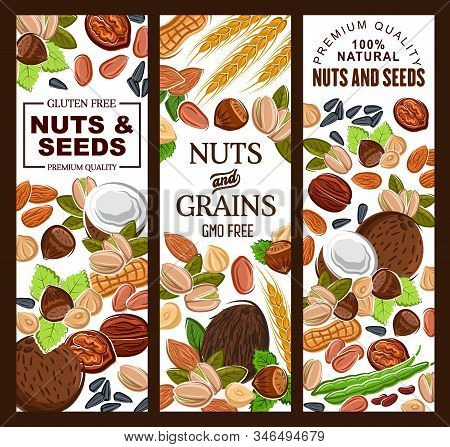 Nuts, Seeds And Cereal Grains Natural Food. Vector Healthy Pistachios, Kernels And Peanuts, Hazelnut