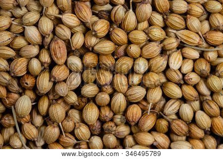 Close Up Of Dried Coriander Seeds, Small Ball White Pale Or Pale Brown With A Fragrant Aroma Used As