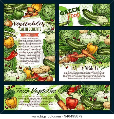 Green Food, Fresh Vegetables And Farm Product Frames Sketches. Vector Healthy Veggies, Carrot And Cu