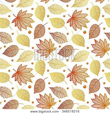 Autumn Beautiful Seamless Pattern With Maple Leaves, Poplar Birch-vector Illustration. On A White Ba