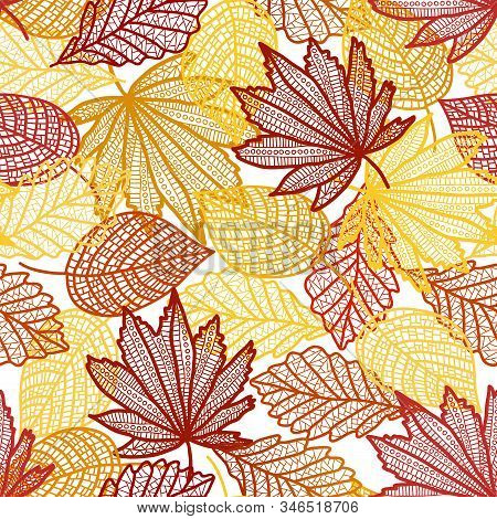 On A White Background Large Autumn Leaves Maple Birch And Poplar Superimposed On Each Other Contour.