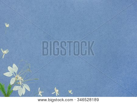 Page From An Old Photo Album Blue Color. Scrapbooking Element Decorated With Leaves, Flowers And Pet