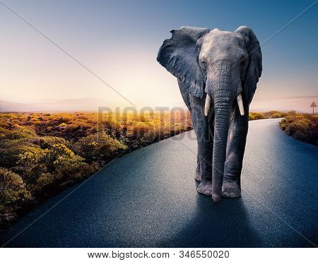Conceptual Photograph Of Huge African Male Elephant Standing In Middle Of Black Asphalt Road. Surrea