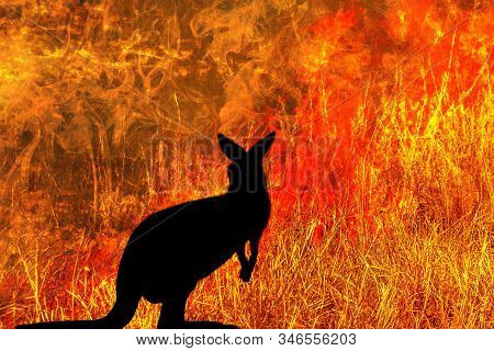 Kangaroo Silhouette Looking A Fire In Australia Forests. Australian Wildlife In Bushfires 2019 And 2