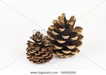 A Pair Of Pine Cones