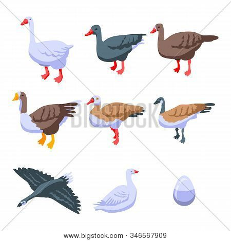 Goose Icons Set. Isometric Set Of Goose Vector Icons For Web Design Isolated On White Background