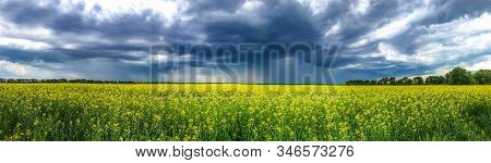 Beauty In Nature Summer Landscape. Panoramic View On Canola Flowers Or Yellow Rape Seed Field Before