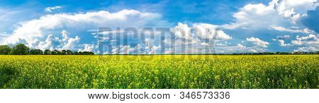 Beauty In Nature Summer Landscape. Panoramic View On Canola Flowers Or Yellow Rape Seed Field. Idyll