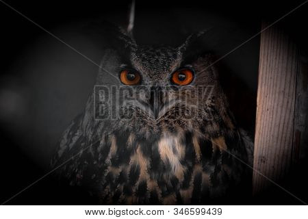 The Eurasian Eagle-owl (bubo Bubo) Is A Species Of Eagle-owl That Resides In Much Of Eurasia