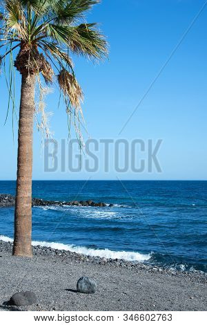 Beach In Candelaria Town With Palm On A Sunny Day