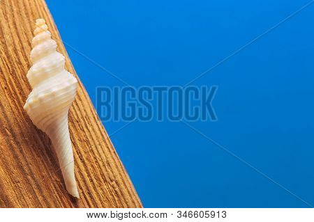 Shell On A Wood In The Blue Background