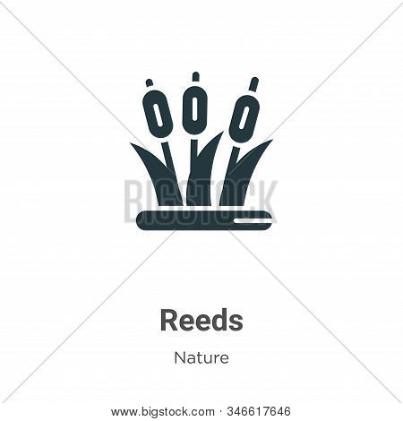 Reeds icon isolated on white background from nature collection. Reeds icon trendy and modern Reeds s