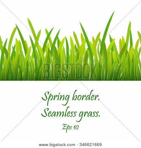 Seamless Pattern Of Green Grass. Green Grass Border . Realistic Green Grass Design , Eco Nature Gree