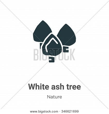 White Ash Tree Glyph Icon Vector On White Background. Flat Vector White Ash Tree Icon Symbol Sign Fr
