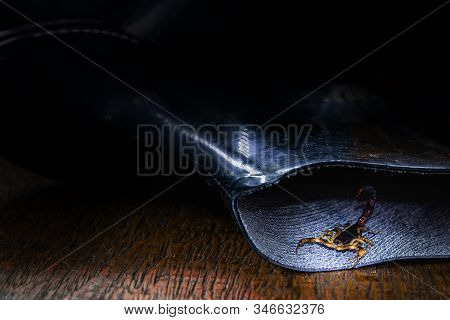 Real Photo Of A Scorpion In A Boot. Careful, Puffy Animal Inside The House. Scorpion Sting