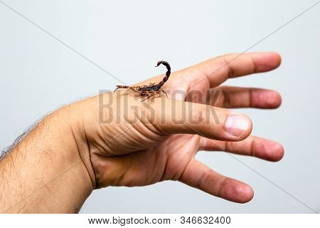 Photo Of A Scorpion Sting In A Person's Hand. Scorpion Sting, Scorpion Poison. Tityus Serrulatus, Kn