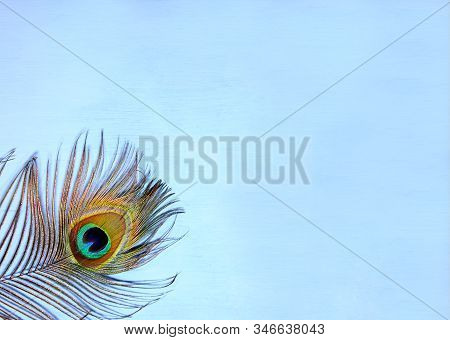 Detail Of Peacock Feather Eye On Turquoise Background. Luxury Abstract Texture For Peafowl Wallpaper