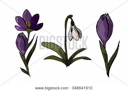 Saffron Set. Isolated Saffron On White Background. Eps 10. Vector Illustration